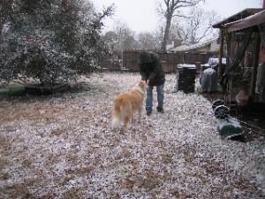 A White Christmas in Dallas Texas, 2009