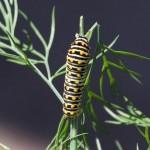 2014.04.15_Caterpillar_0359